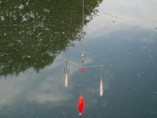 BAIT UP 3 avec 2 vifs décollés de 25cm du fond