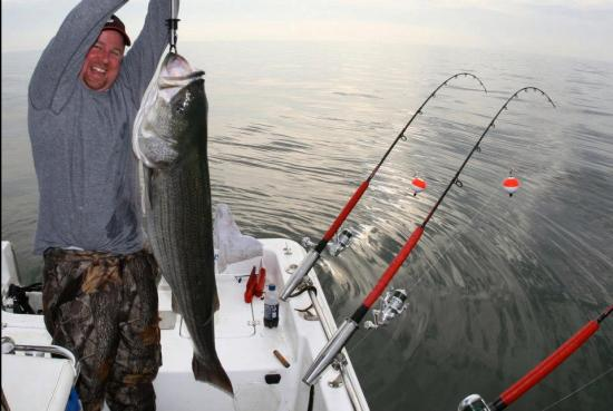 S 100 et STRIPED BASS (STRIPER in USA)